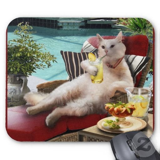 Mouse Pad A Cat Vacation Cat Vacation Cute Funny Animals Funny Animals