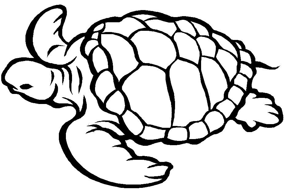 Coloriage Tortue A Imprimer Turtle Coloring Pages Turtle Coloring Pages