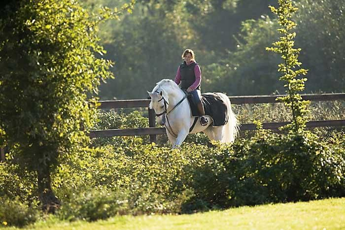 Gorgeous grey Holsteiner Stallion out for a morning stretch in the sunshine. ♥ #Horse #Equine #Country #Horseback_riding