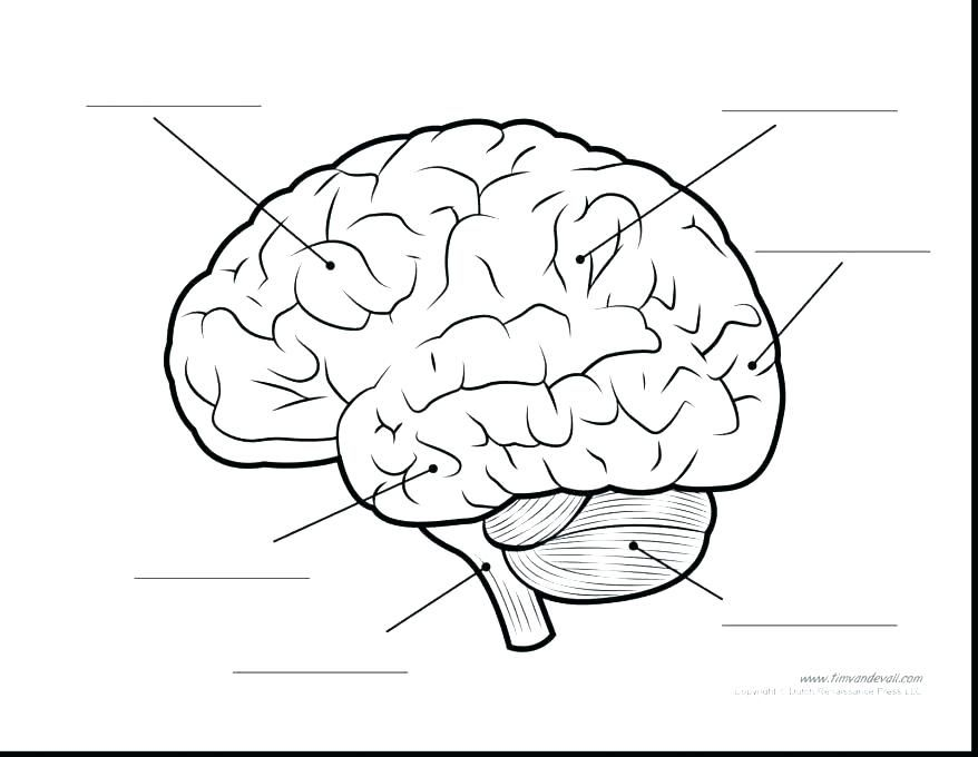 Parts Of The Brain Coloring Page Brain Anatomy Coloring Book As