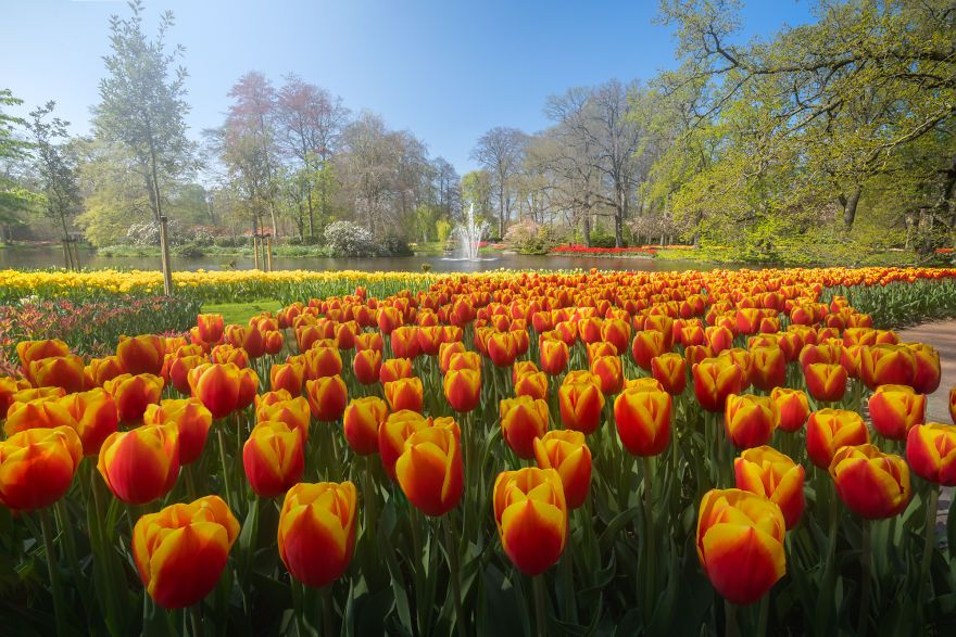 The Most Beautiful Flower Garden In The World Has No Visitors For The First Time In 71 Years And I Got To Capture It 31 Pics In 2020 Beautiful Flowers Garden