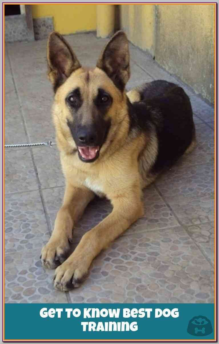 Try These Dog Training Tips For Maximum Success German Shepherd