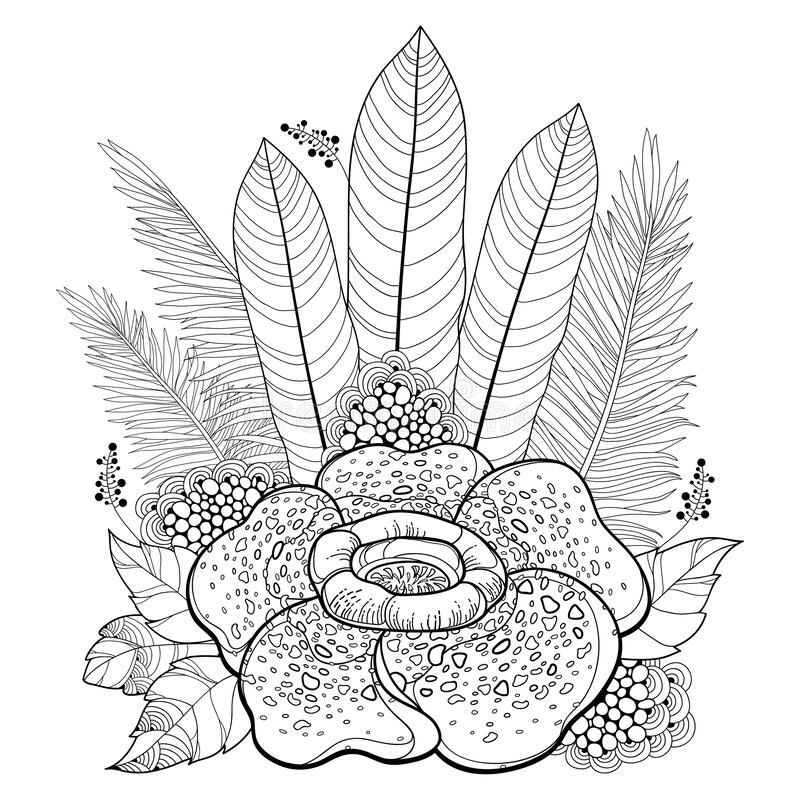 Vector Bouquet Of Outline Tropical Rafflesia Arnoldii Or Corpse Lily Flower And Palm Leaf In Black Isolated On White In 2020 Lily Flower Illustration White Background