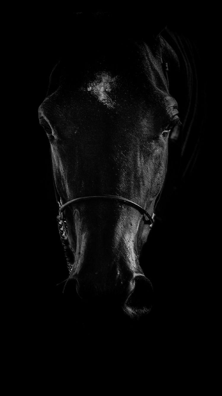 Dark Horse Horse Wallpaper Horse Background Horses