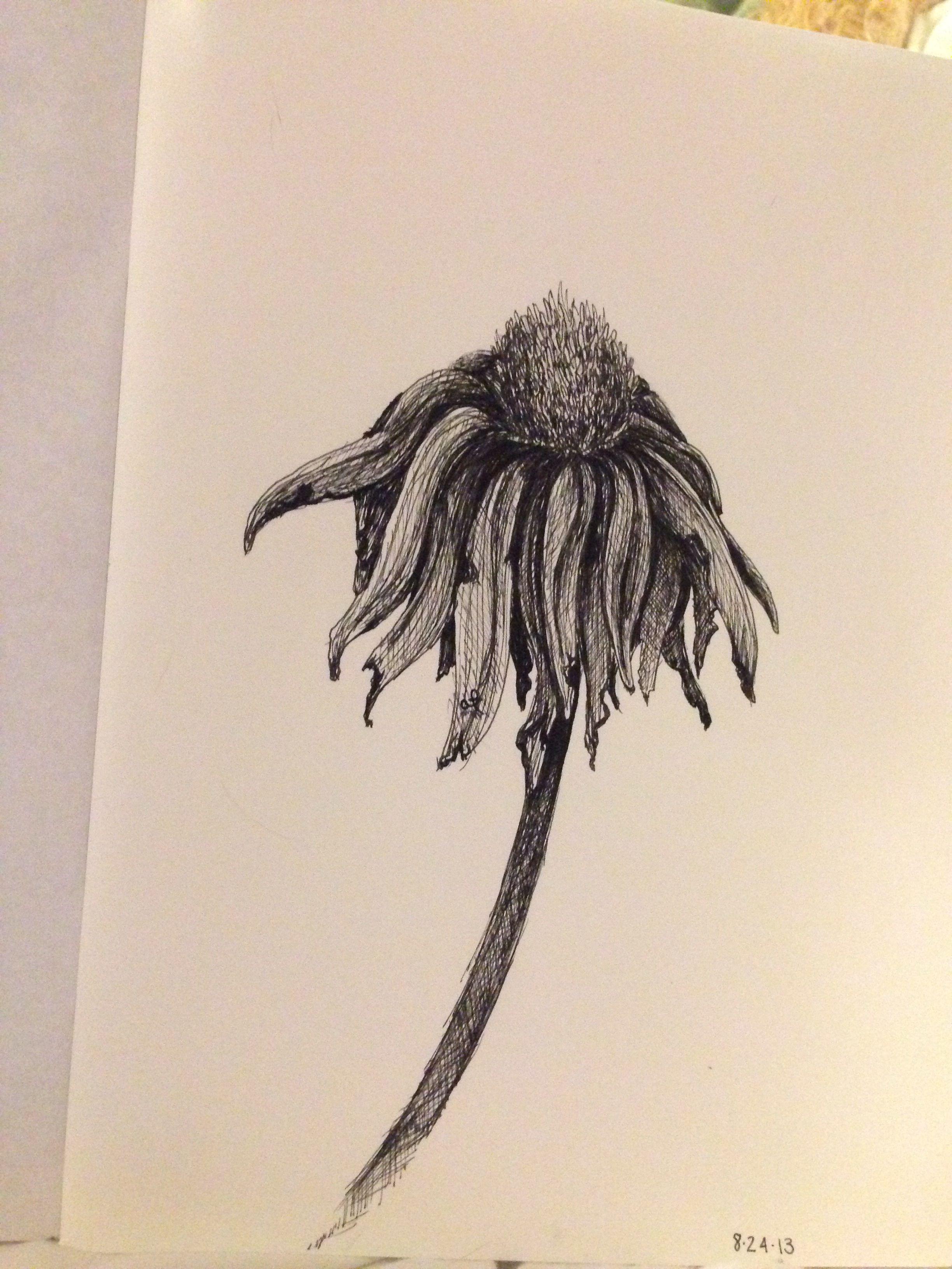 wilting flower drawn by alexis fazio skls portraits
