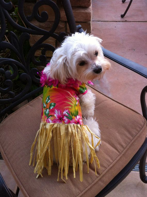 Summer Luau Hawaiian Print Grass Skirt Dog By Upsadaisydesigns