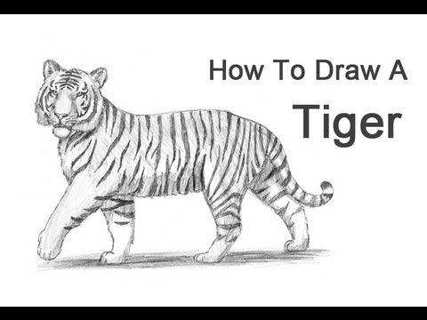 How to draw a tiger in a walking pose. #video #tutorial ...