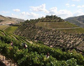 Quinta do Crasto | Guia Técnico, Enoturismos | Turismo de Portugal, Douro Valley, Portugal