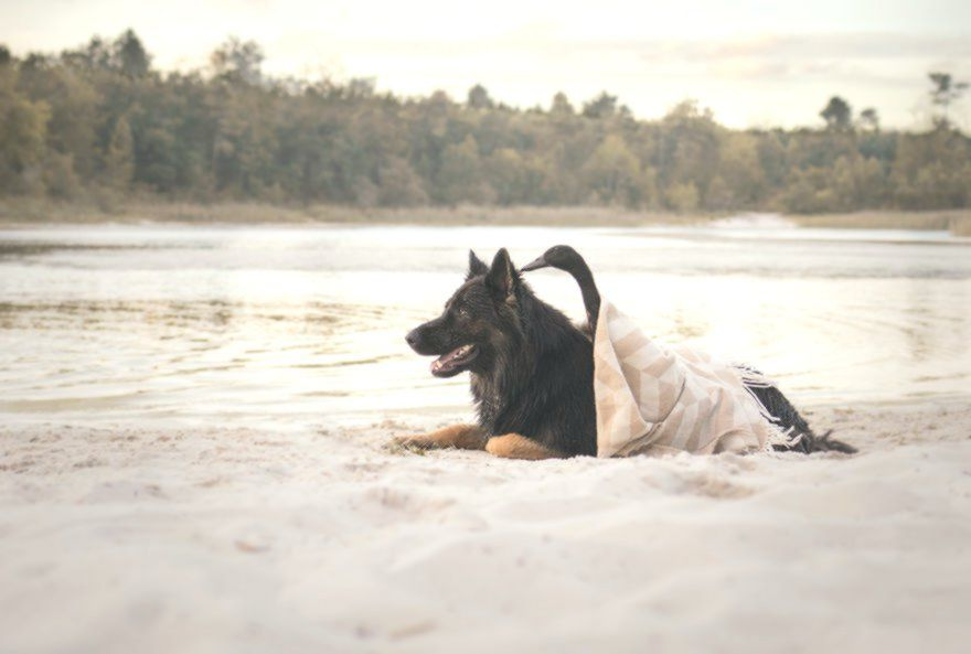 Heart Melting Guaranteed 22 Pictures Of A Duck And Dog Dogs Duck Heart Melting