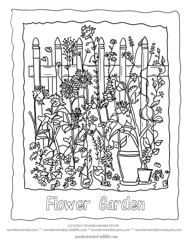 Flower Garden Coloring Sheet 1 With Added Floral Lettering To Color In A Little Picket Fence