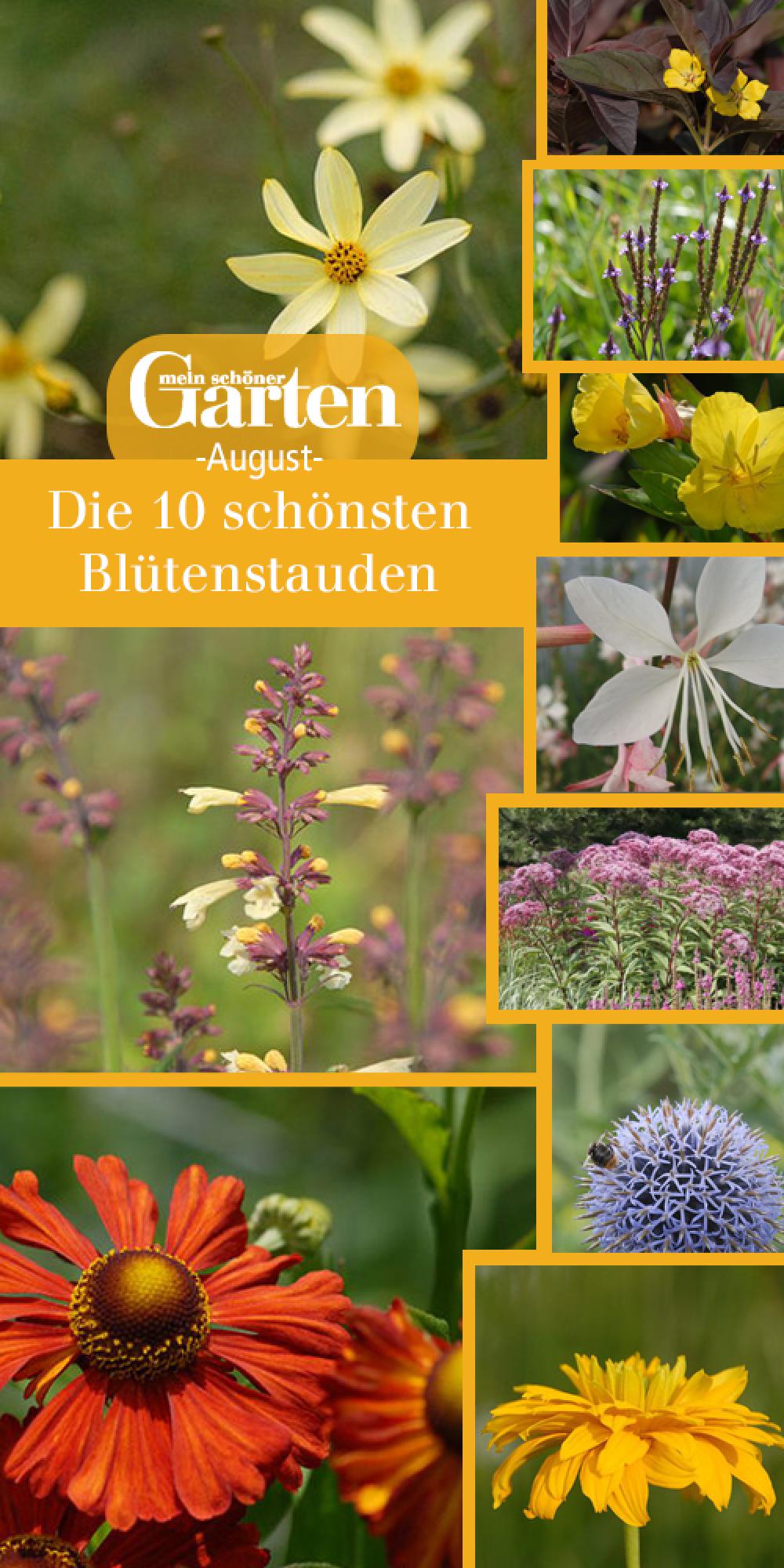 Die 10 schönsten Blütenstauden im August | Stauden, Schöne gärten ...