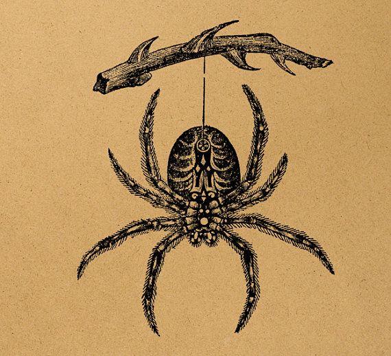 Spider Illustration Digital Image Download By Milliondownloads