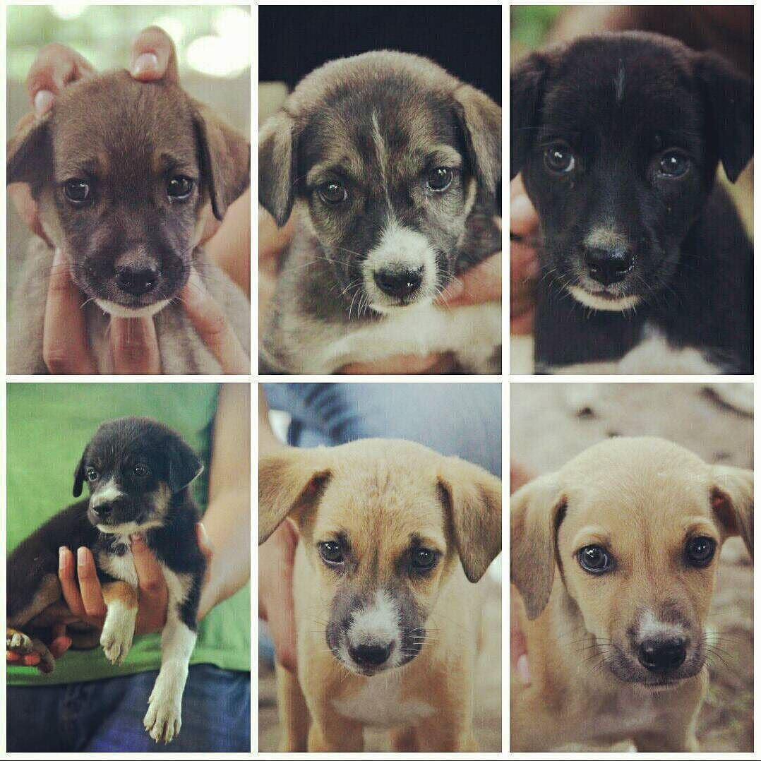 Eight Puppies Were Dumped In Sector 5 Gurgaon A Month Ago When