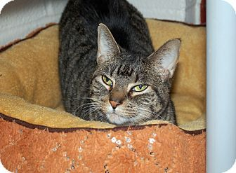 Samantha Adopted 2 28 15 Cat Adoption Pets Pet Adoption