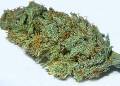 Washington State Residents - You can still purchase Medical Marijuana online! Visit www.yourcannabiswashington.com today!