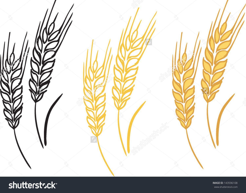 Barley Illustration Wheat barley ears vector illustration ...