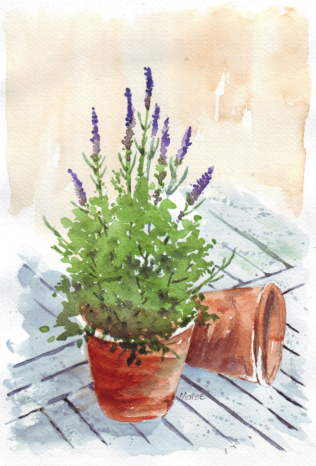 Maree Clarkson Art Creativity My Sketchbook Lavender In A Pot Watercolor Flowers Art Painting Flower Painting