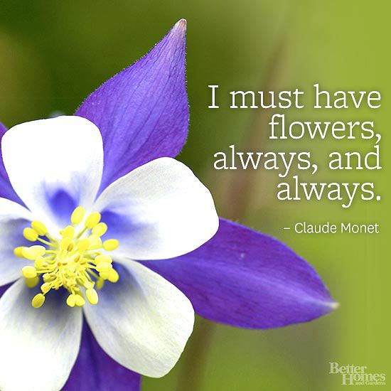 Flower Quotes, Garden Quotes, Flowers