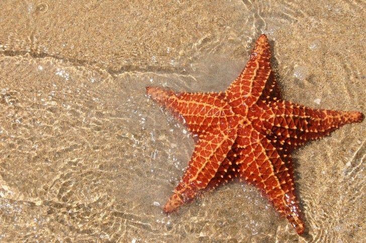 starfish, beach, water