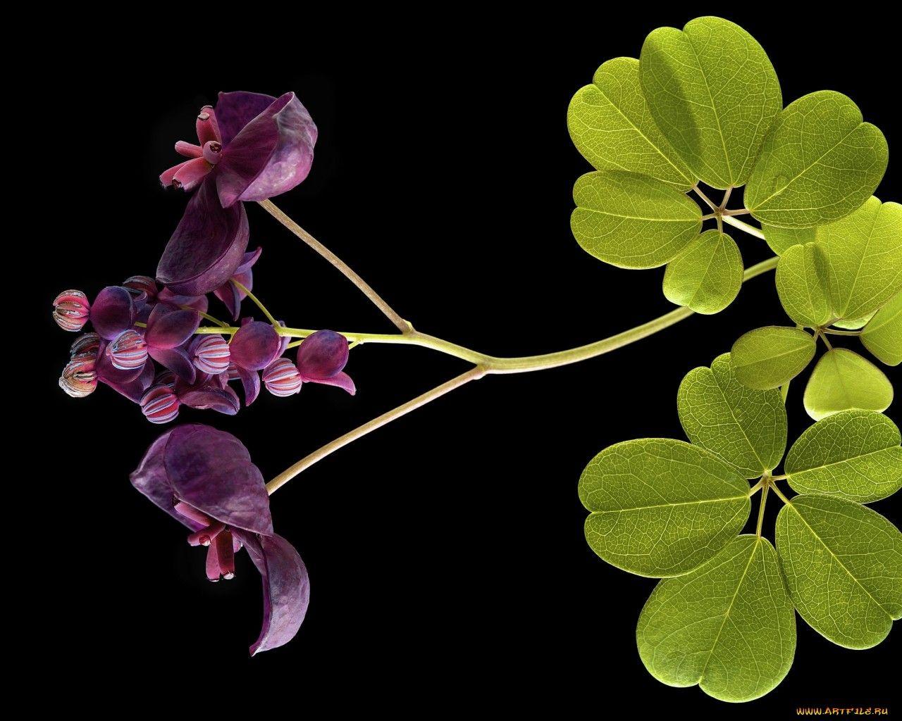 цветок на воде обои для рабочего стола