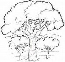 Image Result For Trees Forest Background Coloring Pages Tree Coloring Page Tree Drawing Tree Sketches