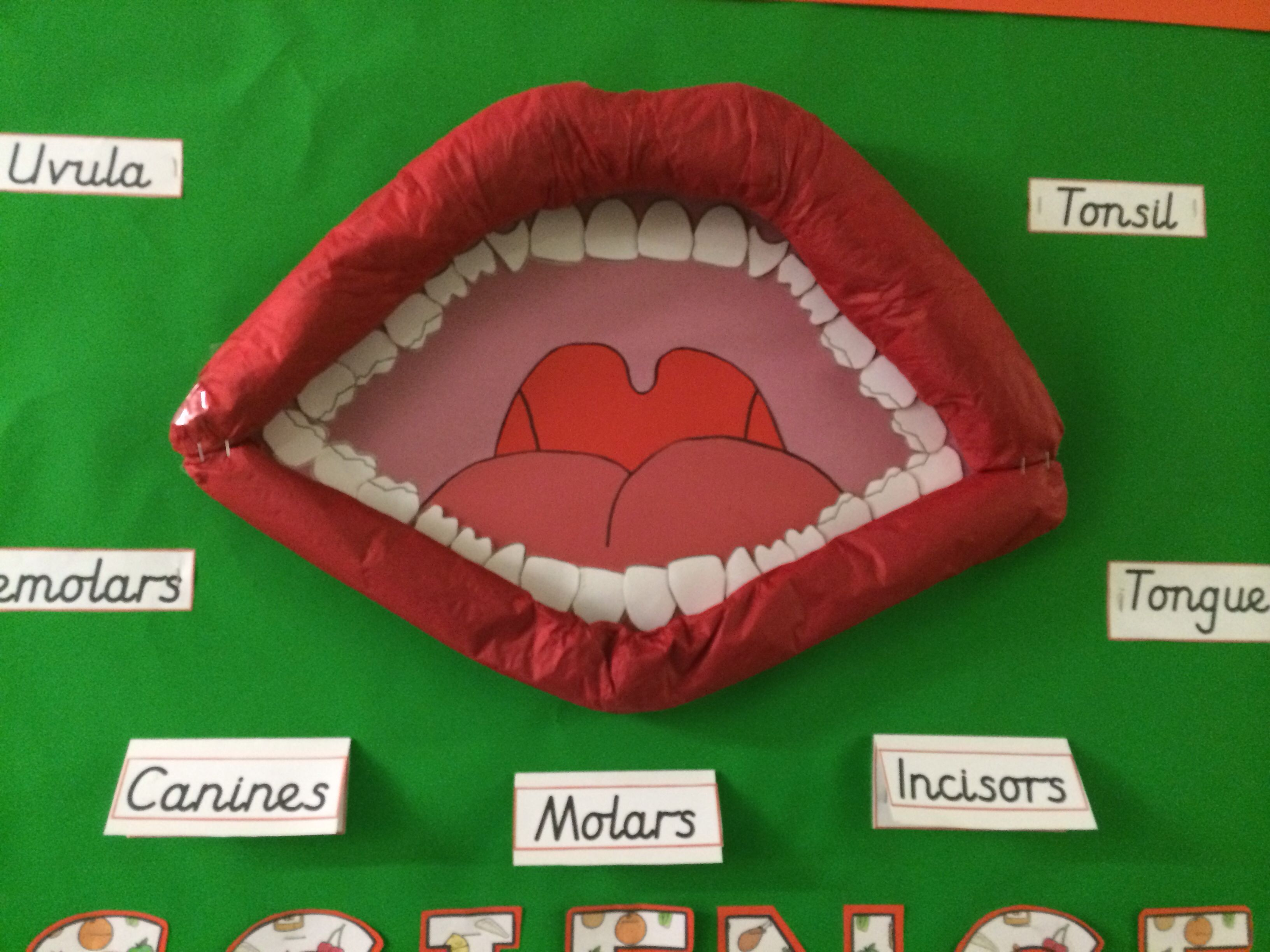 Primary School Display About Teeth And The Mouth