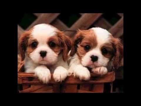 Los Perros Más Pequeños Y Lindos Del Mundo Razas De Perros Pequeños Razas De Perros Imagenes De Perros