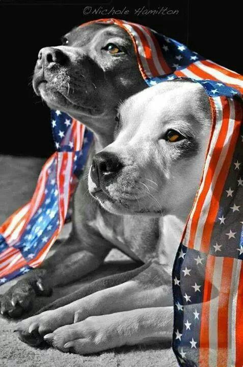 Patriotic Pit Bulls Dogs Pitbulls