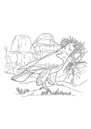 Ausmalbild Adler In Der Wildnis Ausmalbilder Tiere Ausmalen Malvorlagen Tiere