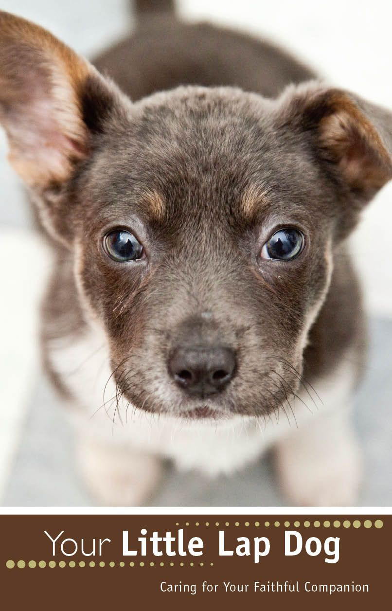 small dog breeds with pictures and names Google Search