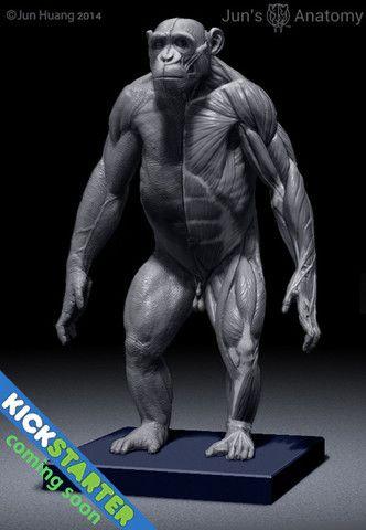 Elephant Anatomy model 1/20th scale v.1 | anatomía | Pinterest ...