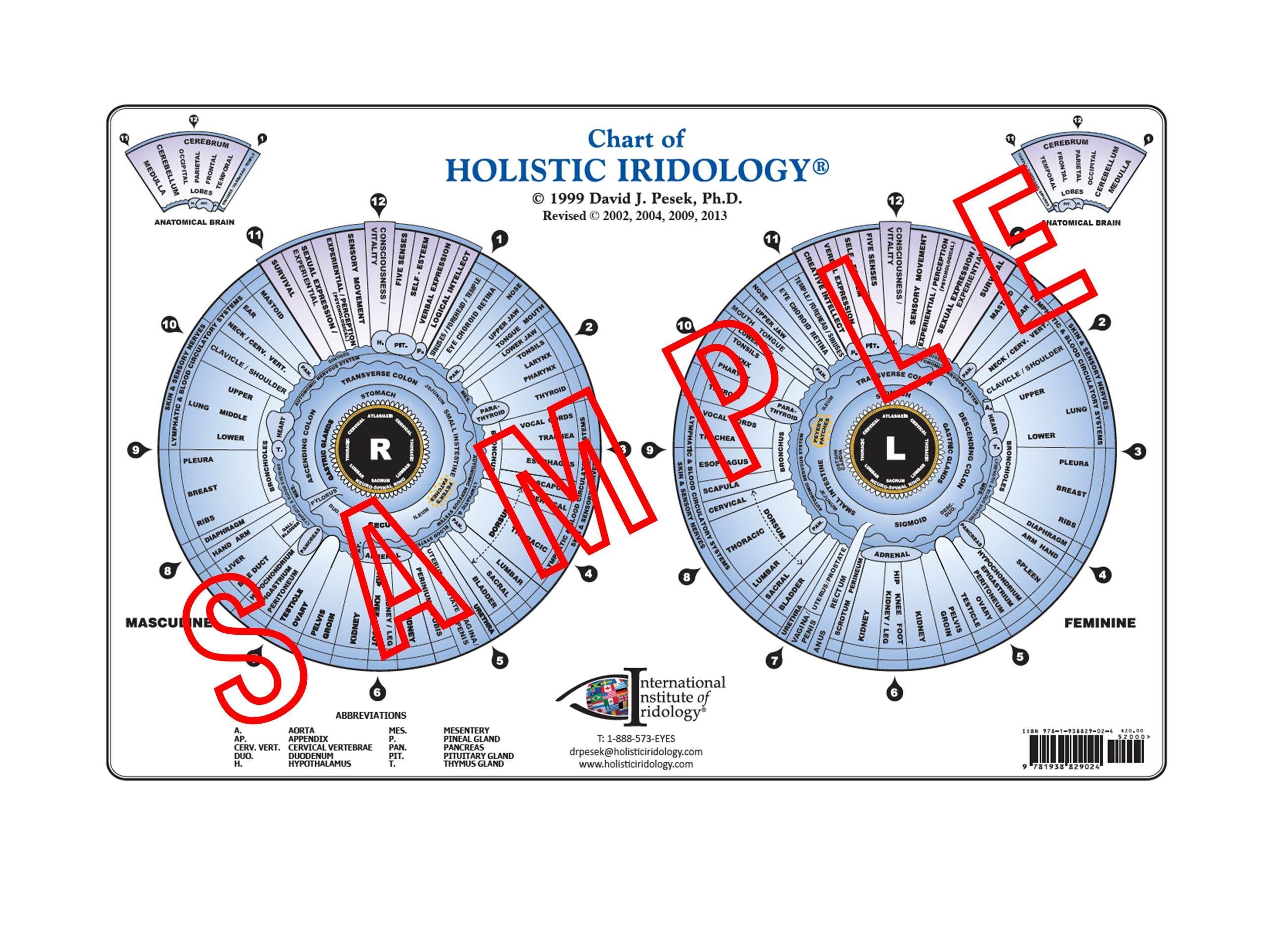 Chart of holistic iridology salud natural pinterest salud chart of holistic iridology geenschuldenfo Gallery