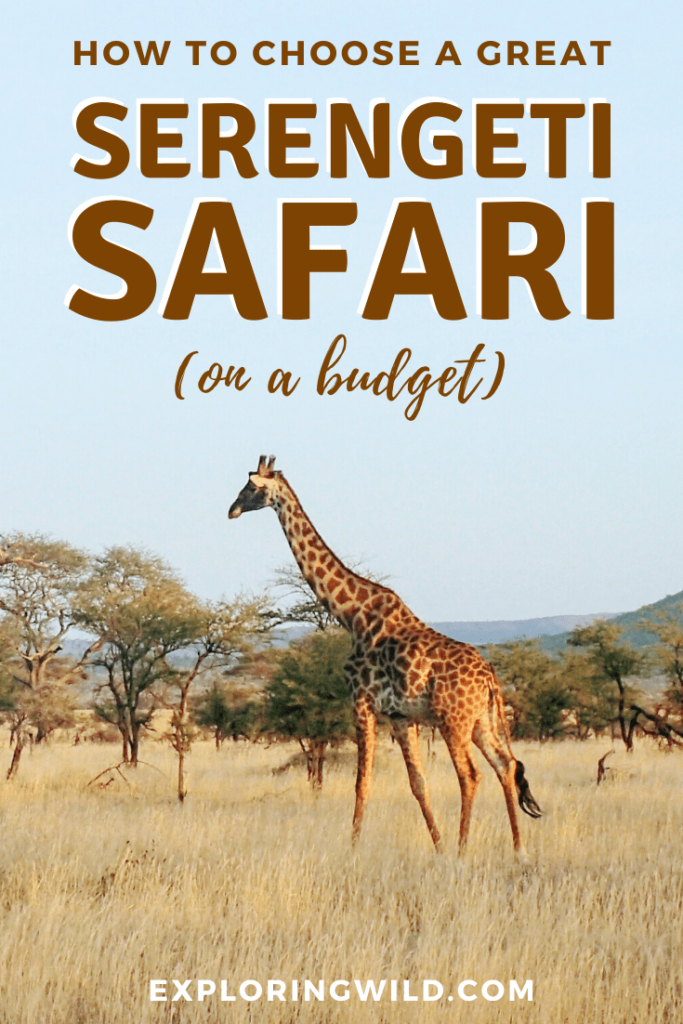 A Serengeti safari is on many peoples' travel bucket list, but if you're a budget traveler, can you still enjoy this exciting experience? Yes! Here's how to choose a memorable safari if you're traveling to East Africa on a budget. #Africa #travel #AfricaTravel #safari #eastAfrica