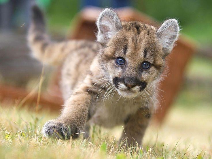 Pumas und Cubs Speed-Dating NYC