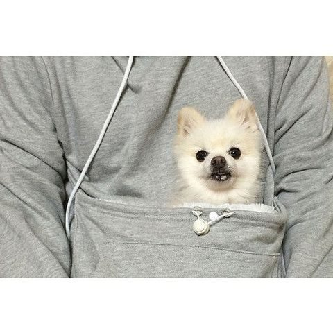 $50 DOG LOVERS HOODIE WITH DOG CUDDLE KANGAROO POUCH