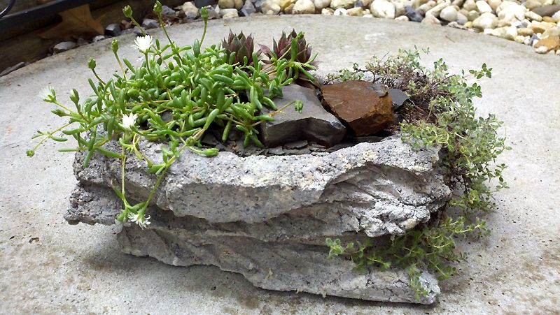 A textured papercrete and lava rock pot planted with semps, woolly thyme, Osberg iceplant, and a few stones for company.