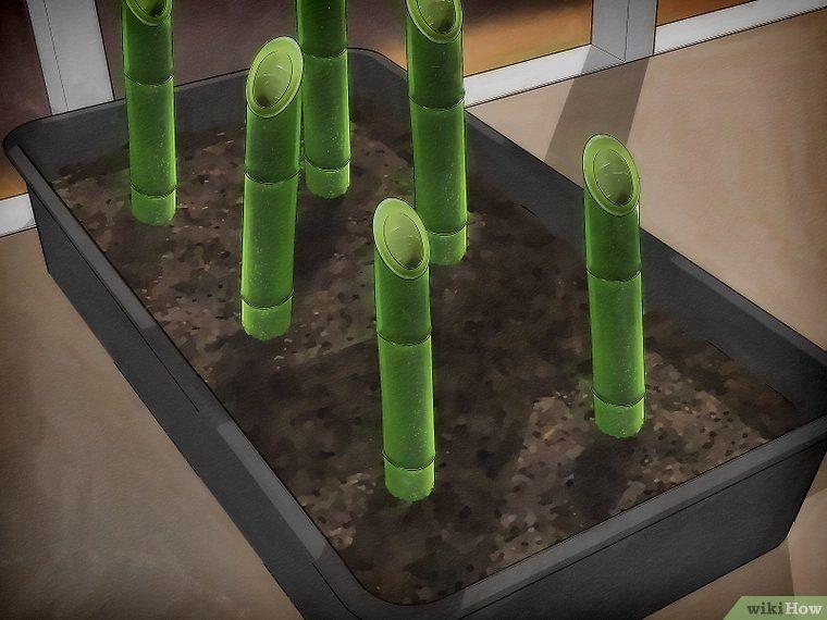 3 Ways To Propagate Bamboo Growing Bamboo Bamboo Garden Indoor Bamboo
