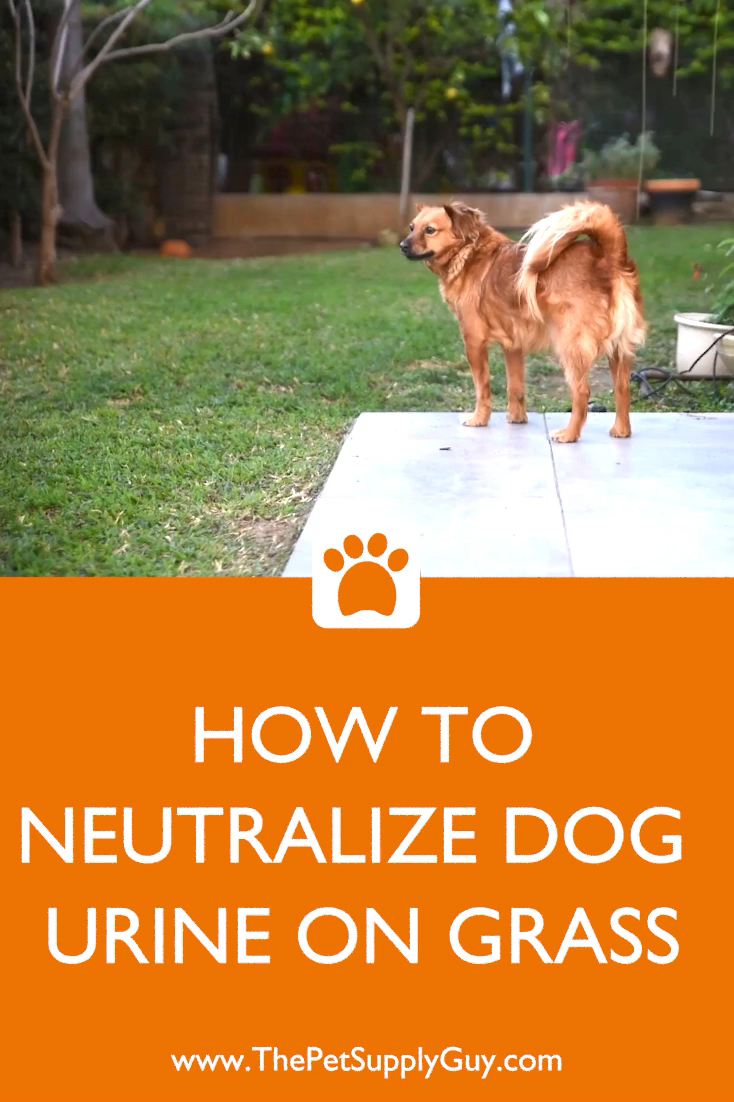 Neutralize Dog Urine On Grass Lawn In 2020 With Images Dog