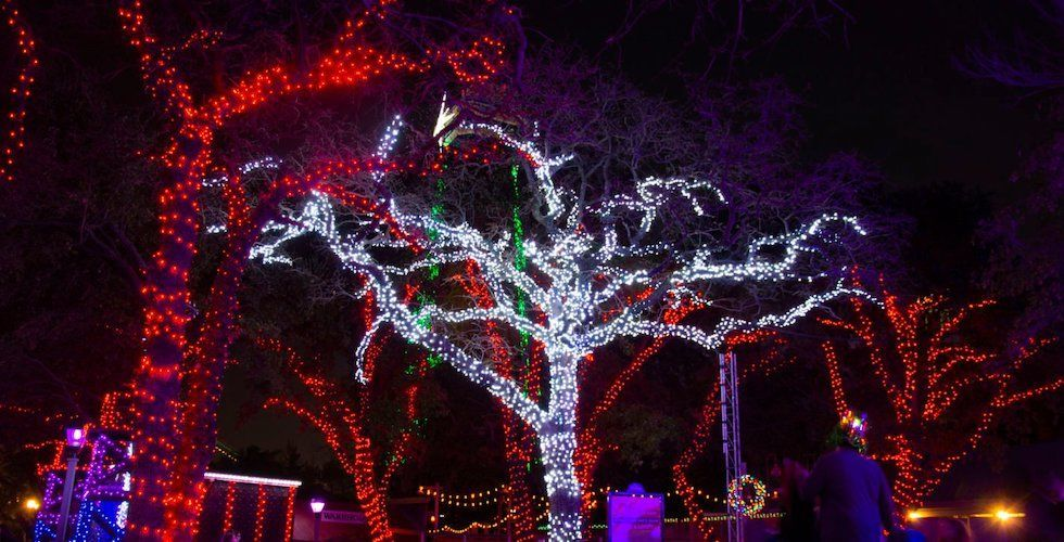 Six Flags Over Texas To Host New Fire Ice Festival In 2021 Fire And Ice Festival Winter Festival Holidays In January