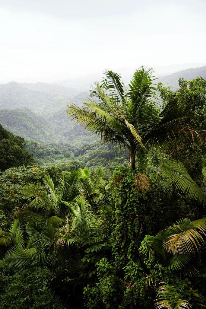 El Yunque Rainforest - Map and Photos #PuertoRico #Travel