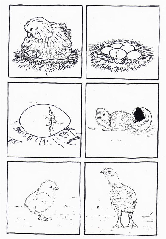 Life Cycle Bird Coloring Page Life Cycles Animal Life Cycles