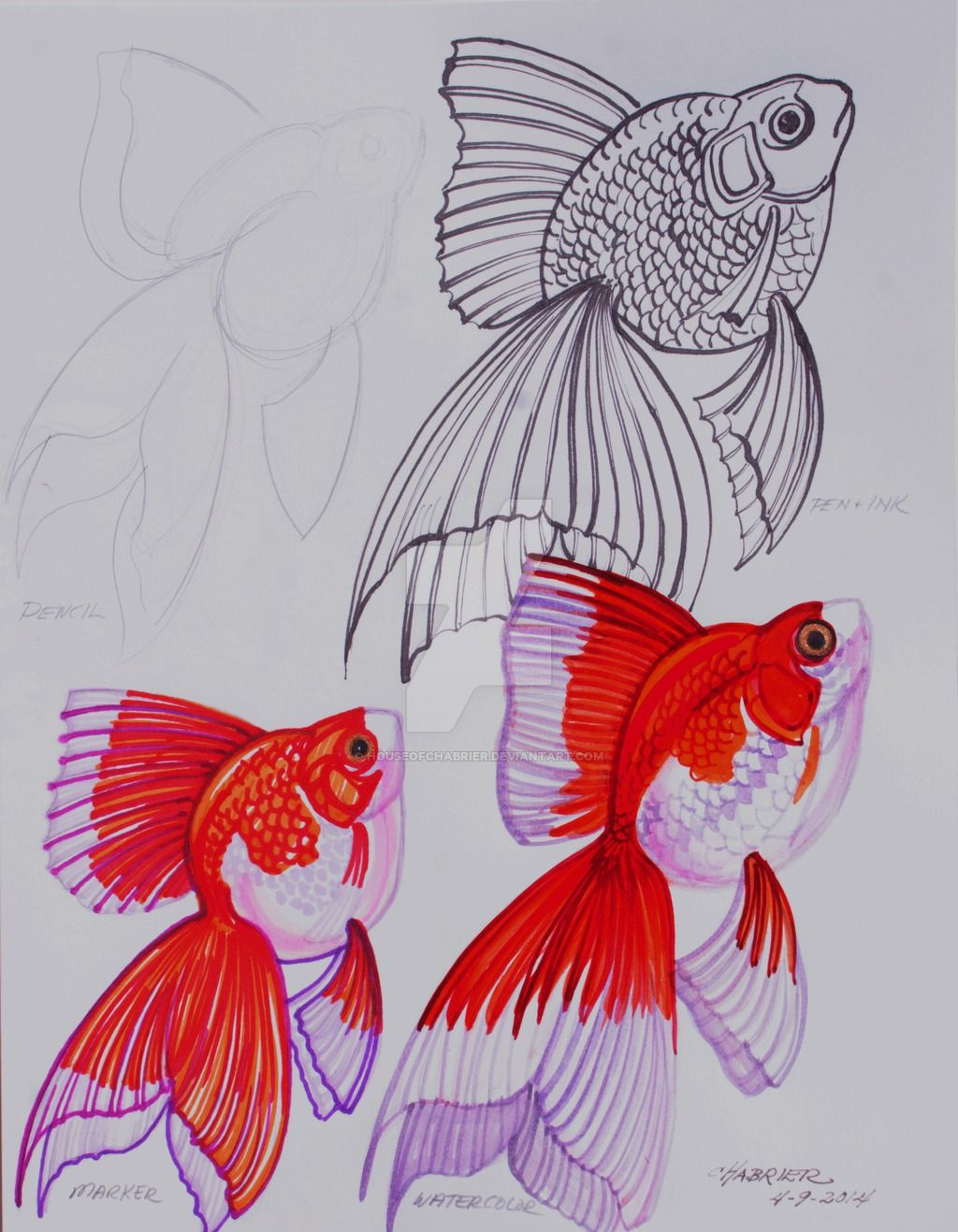 Goldfish Drawing Pencil Ink Marker Watercolor by HouseofChabrier on ...
