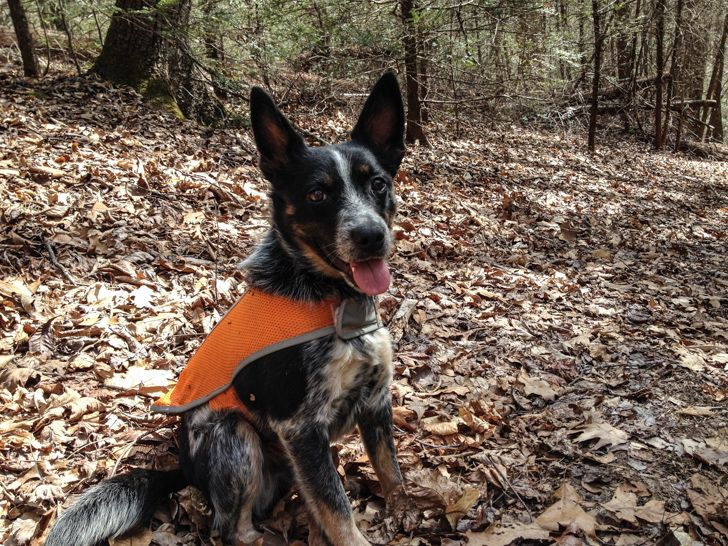 7 Accessories For Dogs That Go Camping Pinterest Dog Rv And Camping