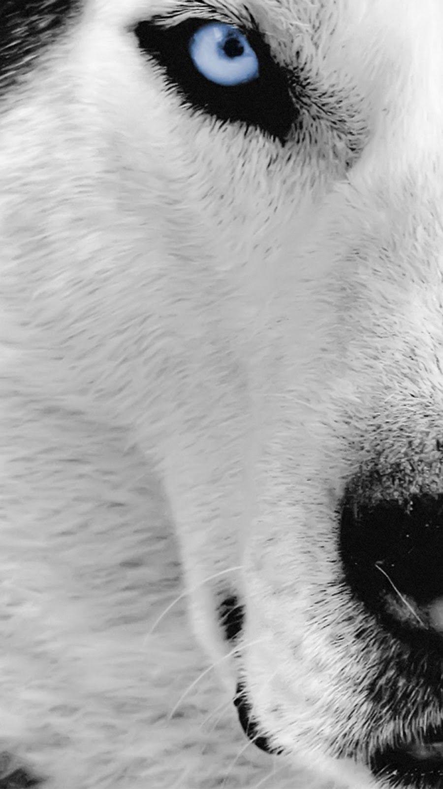 Resultado De Imagem Para Wolf Wallpaper