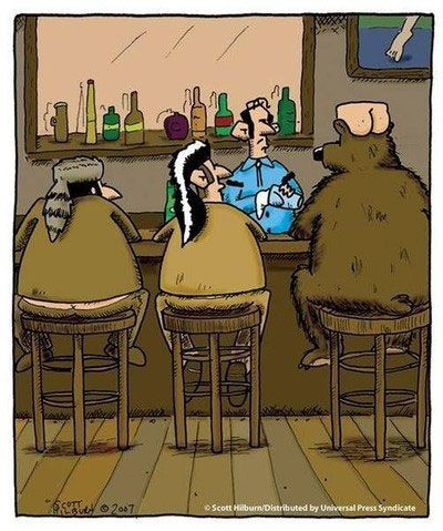 Funny Bear Walks Into A Bar On Imgfave Funny Cartoons Funny Pictures Funny