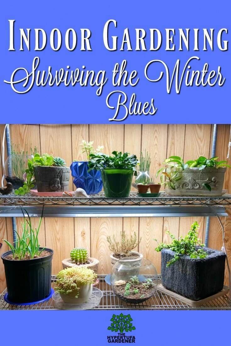 Indoor Gardening Setup under LED lights. I have my tender
