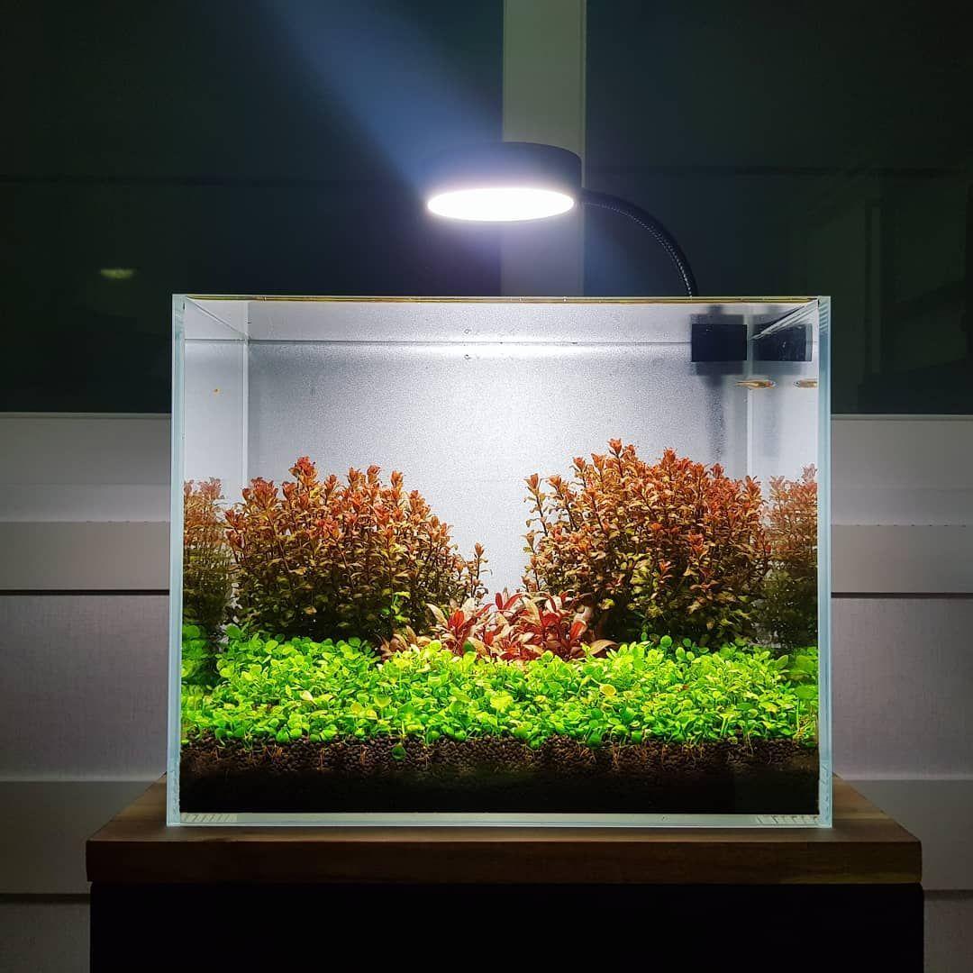Mini Nano Dutch Style Aquascape Aquarium Bể Ca