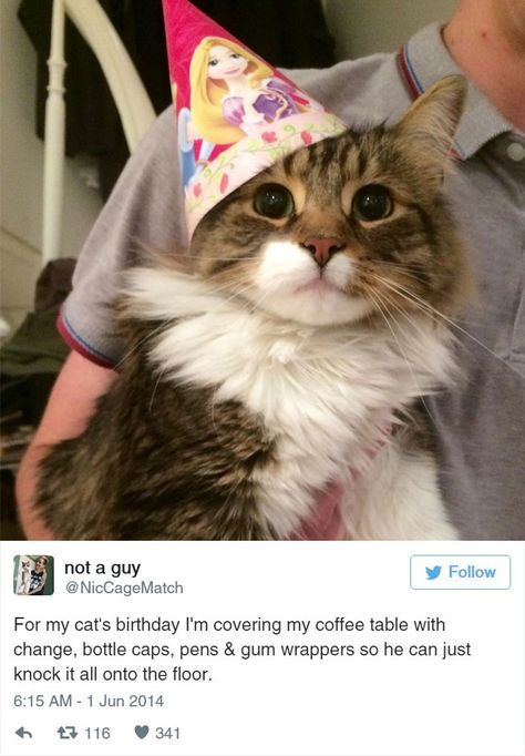 39 tweets about cats that make us laugh every single time i can has cheezburger funny cats funny pictures funny cat memes gif cat gifs