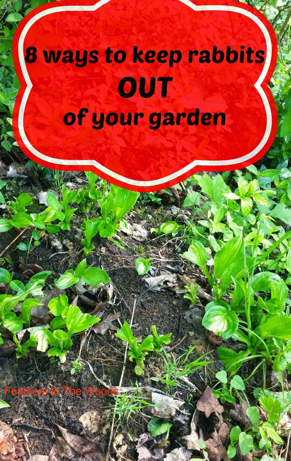 8 tips to keep rabbits out of your garden gardening tips - How to keep rabbits out of a garden ...