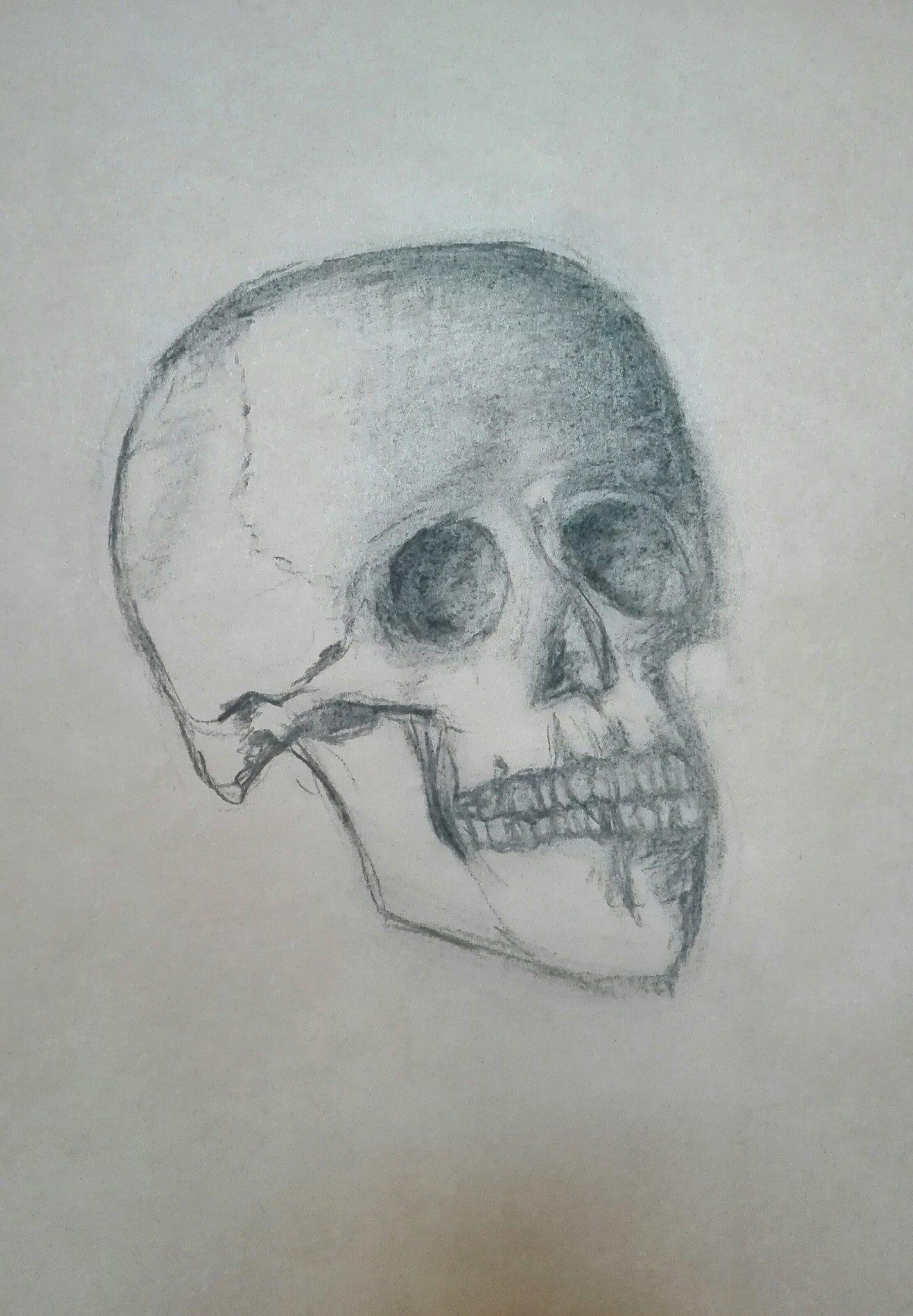 Kurz Pripravy Na Talentovky Kresba Uhlem Lebka Studie Podle